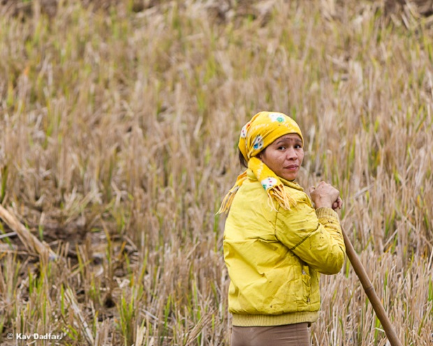 Women working in the field in Mai Chau in Vietnam.